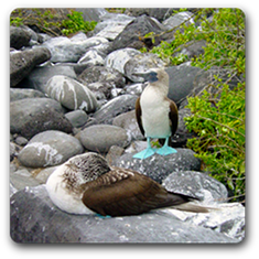 Machu Picchu Galapagos Blue Footed Penguin Image